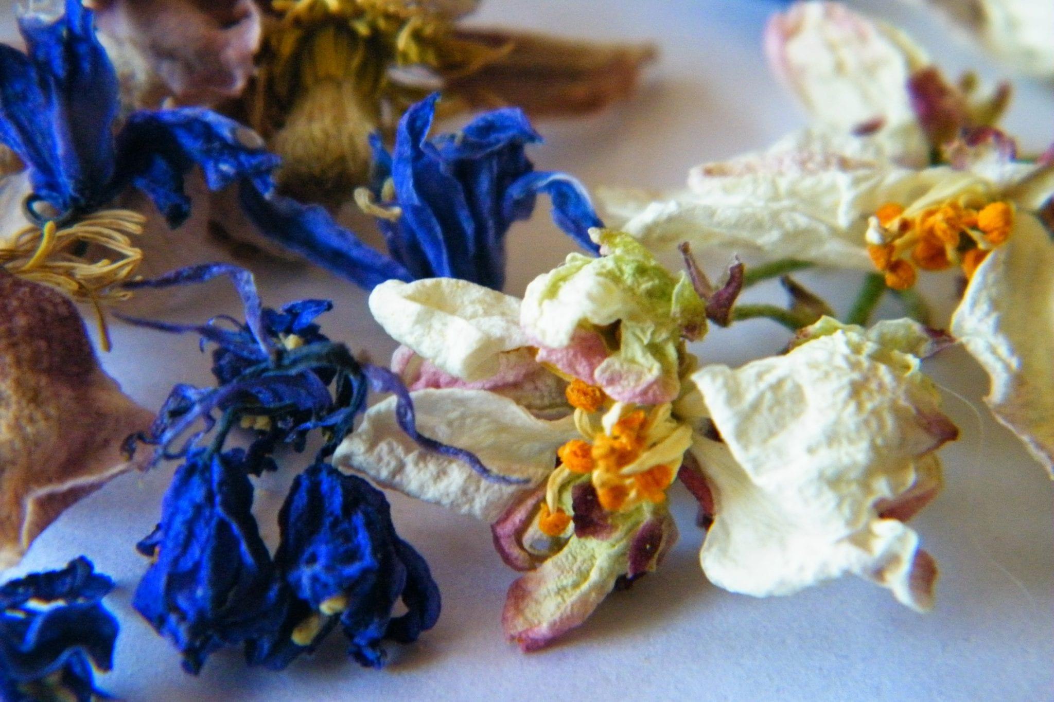 dried clematis, bluebells, orange flowers