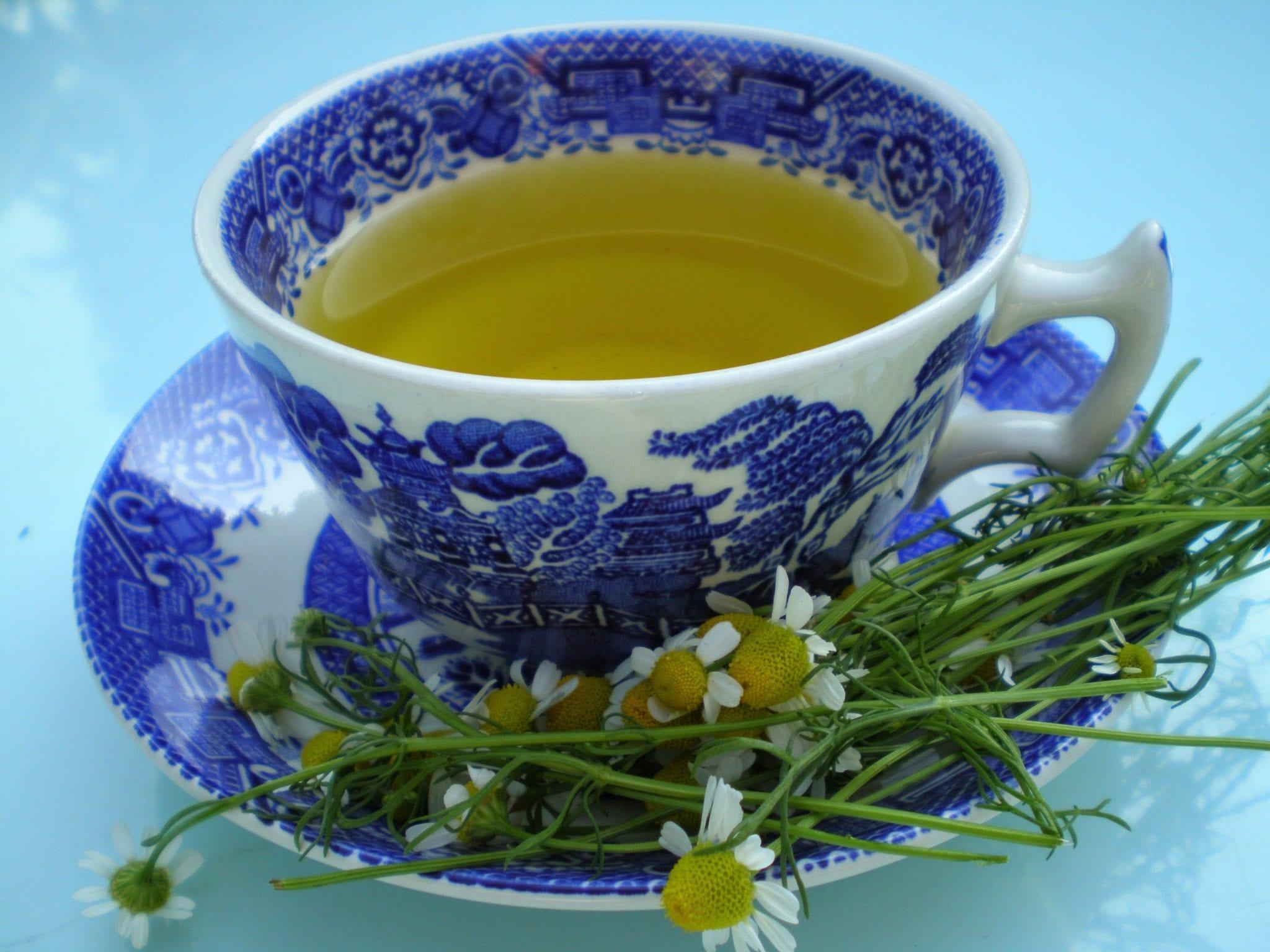 chamomile tea cup